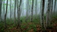 Foresta nella nebbia