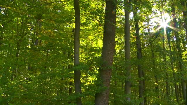Foresta al sole Carrellata