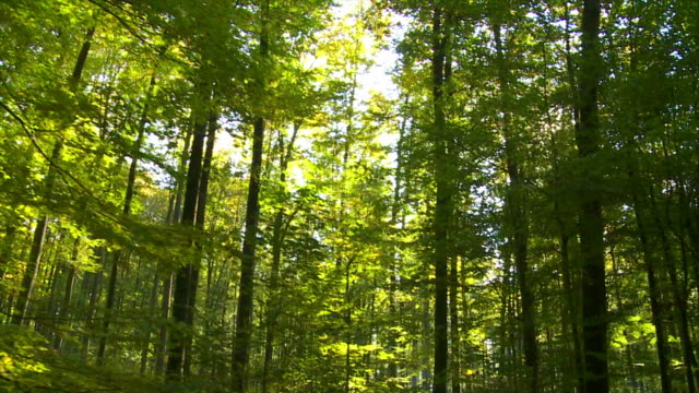 POV Forest In The Sunlight Tracking Shot