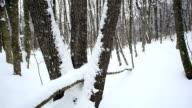 Wald im Winter; HD Dolly