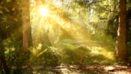 Wald Landschaft HQ1080p