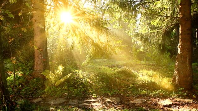Forest landscape HQ1080p