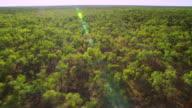 WS AERIAL Forest landscape / Karumba, Queensland, Australia