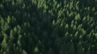 AERIAL Forest of evergreen trees bordering blue and green waters / Vancouver, British Columbia, Canada