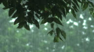 Forest of Rain