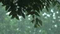 Forest von Regen