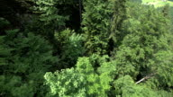 Forest pan downwards
