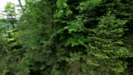 Forest pan upwards