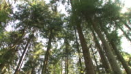 HD: Forest panning