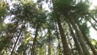 HD: Forest Schwenken