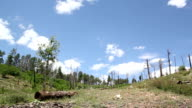 Forest regrowth and renewal