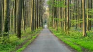 Forest road in the spring, Hallerbos, Halle, Vlaams Gewest, Brussels, Belgium, Europe