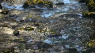 HD-Wald Stream im Herbst (Schwenk von rechts