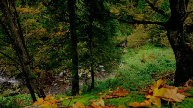 Forest stream in ravine between trees