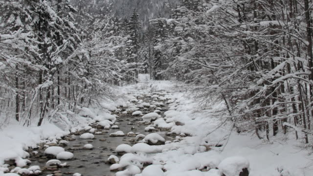 ZO WS Forest stream in snow, Austria