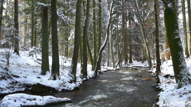 HD Forest Stream in Winter (Tilt up) (4:2:2)