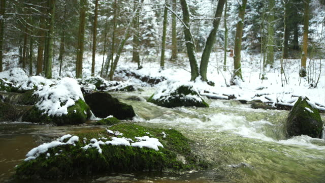 Forest Stream In Winter (4:2:2)