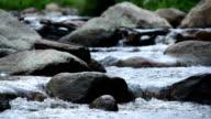 Wald stream läuft über Steine