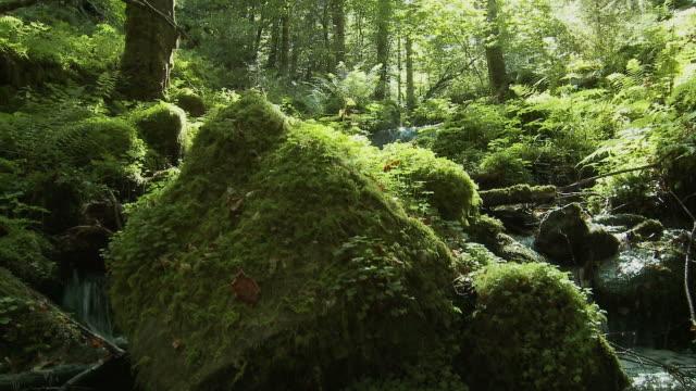 forest stream, summer