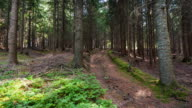 Wald, Zeitraffer