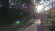 Forest trail in mountain with sunlight, Chichibu