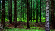 DOLLY: Forest