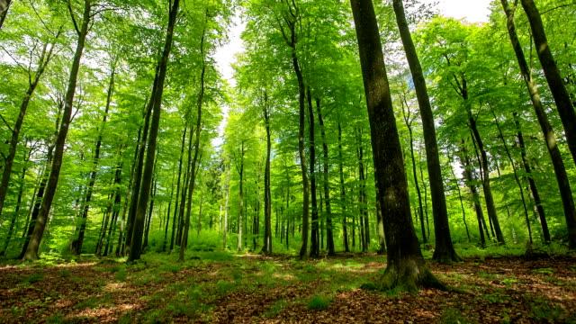 CRANE UP: Forest