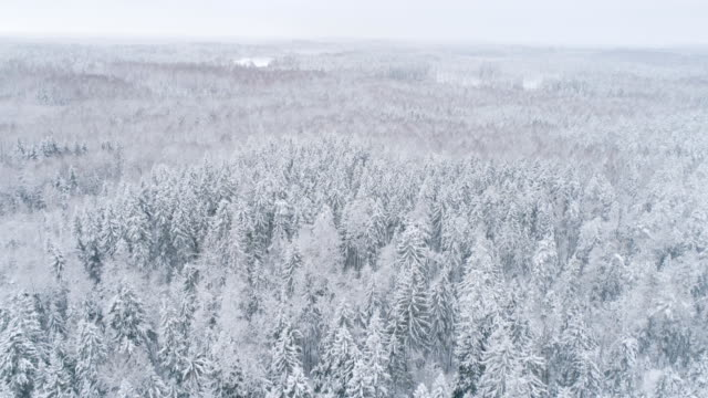 Forest view from above