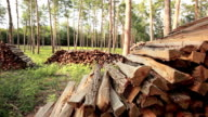 forest with stack of firewood