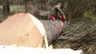 Forstwirtschaft Arbeiter mit Kettensäge