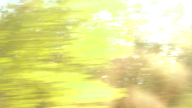 Forrest mit Bäumen im Auto Fenster