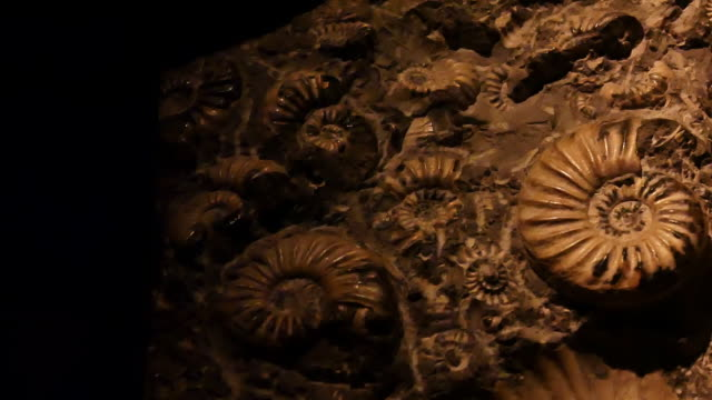 Fossiele & Ammonite close-up panning shot