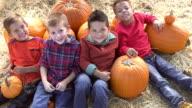 Four multi-ethnic boys in pumpkin patch