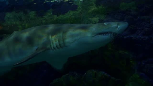 Fyra filmer av hajar i 4K