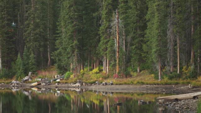 Fox crosses lake shore in Utah