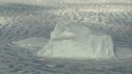 Fragmenting sea ice floats around an iceberg.