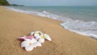 Frangipani flowers (Plumeria) on beach