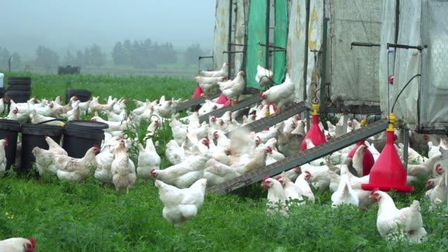 free range chicken coops