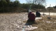 Freeze dried konjac cake production Farmers placing konjac cakes on the straw covered field a farmer watering konjac cakes in the background