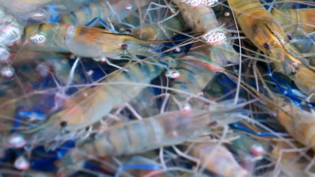 Fresh alive shrimps in seafood market