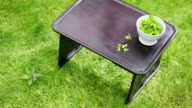 MS DS Fresh balde of grass in bowl was placed on table laying on lawn / Seoul, South Korea