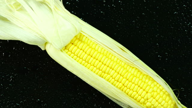 Fresh corn. Top view. Close up.