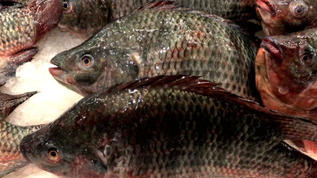 Fresh fish on ice in supermarket, 4K.
