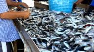 Fresh pesci di mare delle Andamane
