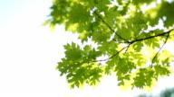 Fresco verde foglie