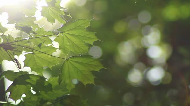Fresche foglie sfondo in HD
