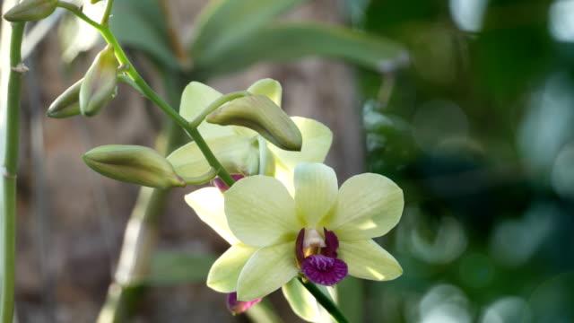 Frischen Orchideen
