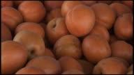 (HD1080i) Fresh Organic Aprium: Cross Hybrid of Apricot and Plum