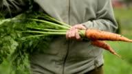 Frische Bio Karotten und Zwiebeln