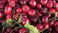 (HD1080i) Fresh Organic Cherries